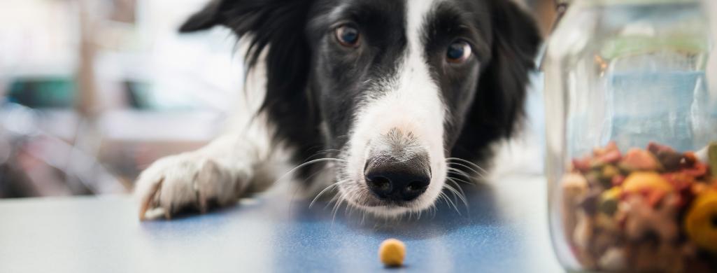 dog catching snack