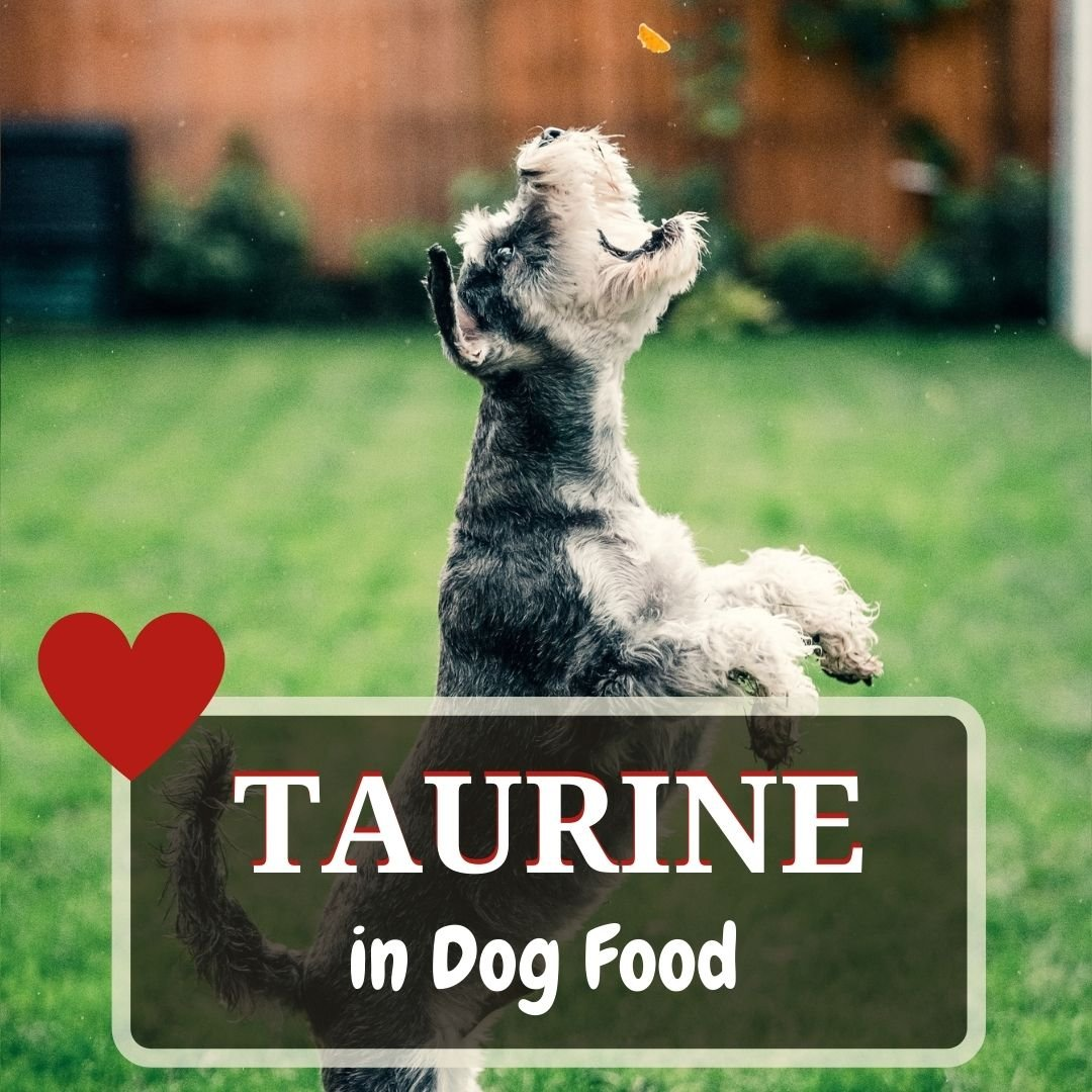 taurine in dog food