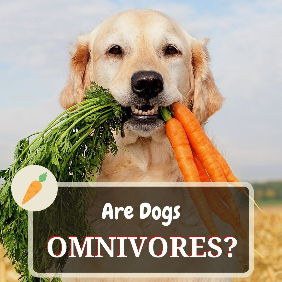 are dogs omnivores