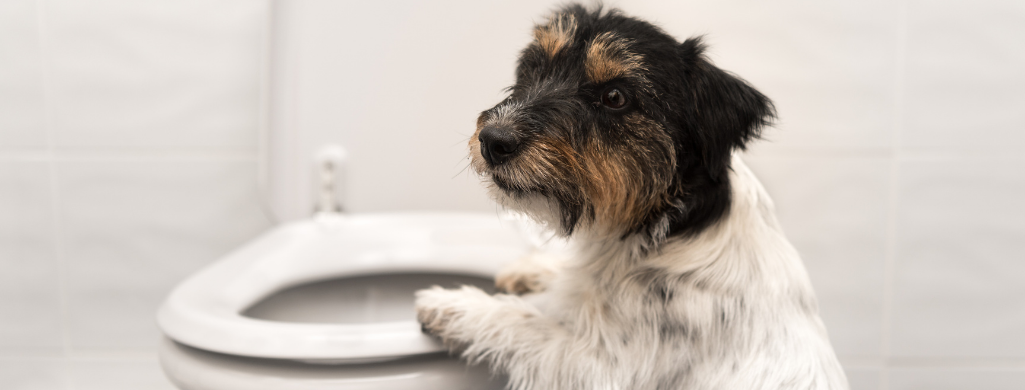 dog and toilet closeup
