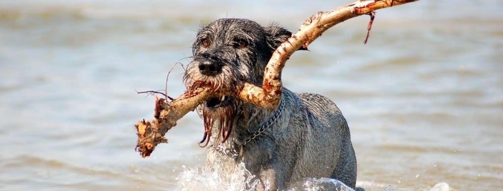 active dog swimming