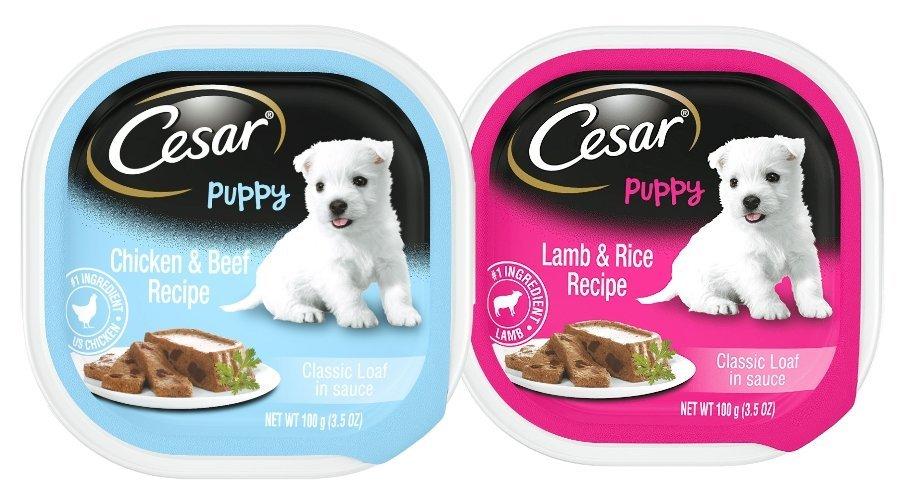 Cesar Puppy